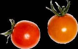 tomatos